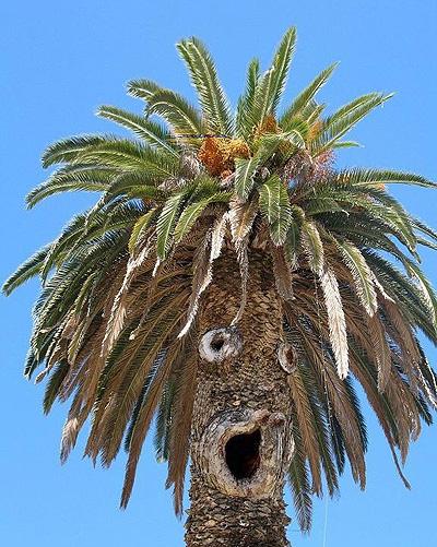Vtipné obrázky - Palma co má styl