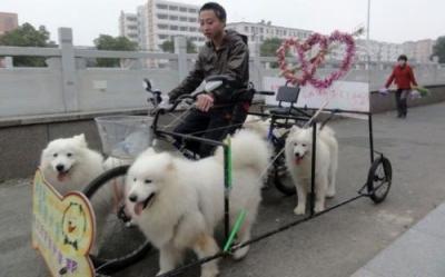 Vtipné obrázky - Obdoba psího spřežení